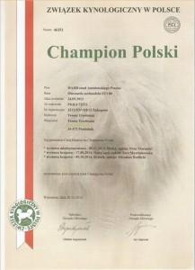 Dyplom CH HADD znad Antałowskiego Potoku
